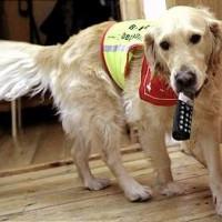 Assistenzhund bringt Telefon